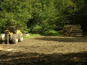 Hollow Hill Forestry | Harvesting