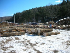 Hollow Hill Forestry | Log Marketing