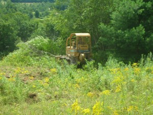 Hollow Hill Forestry | Other Services